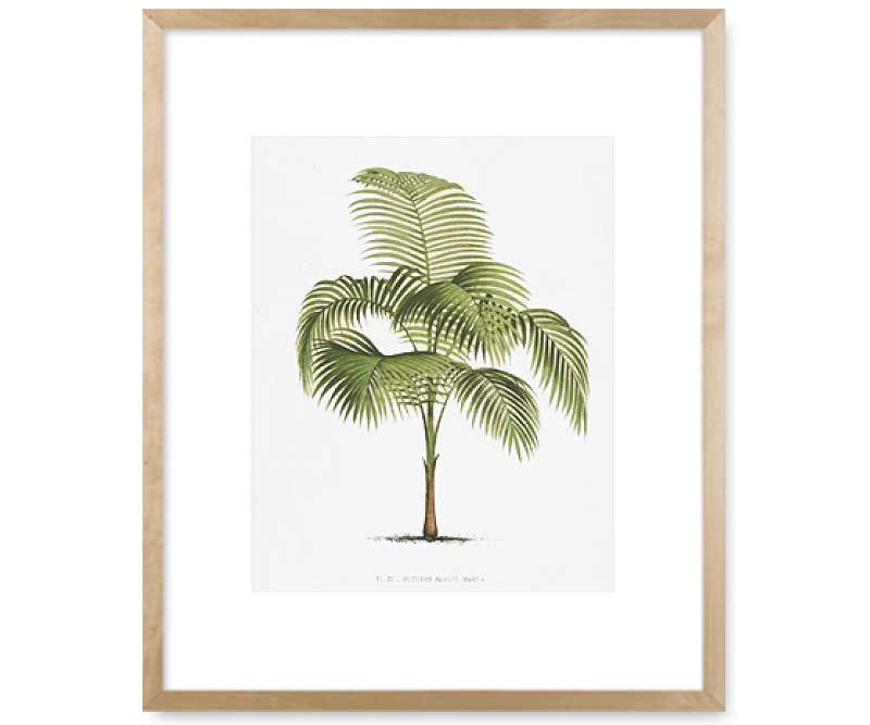 Les Palmiers I Palm Tree Wall Art Print Great Christmas Gift Ideas For Mum And Christmas Gift Ideas For Men Guys Blokes