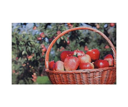 Apple Basket Rubber Door Mat
