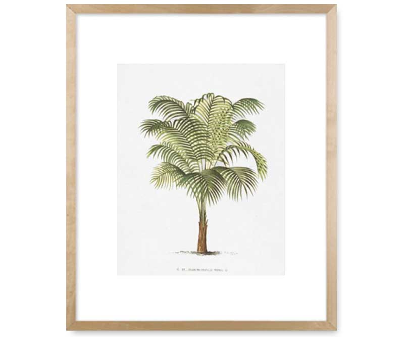 Les Palmiers Ii Palm Tree Wall Art Print Great Christmas Gift Ideas For Mum And Christmas Gift Ideas For Men Guys Blokes